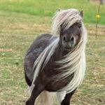 Barney-horse
