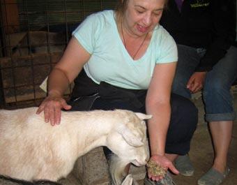 feed-goat